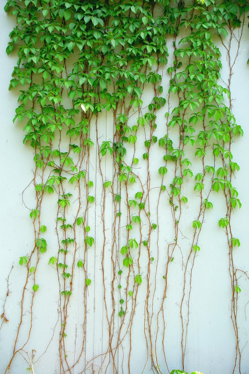 Waar koop je het beste plantenklimrek?